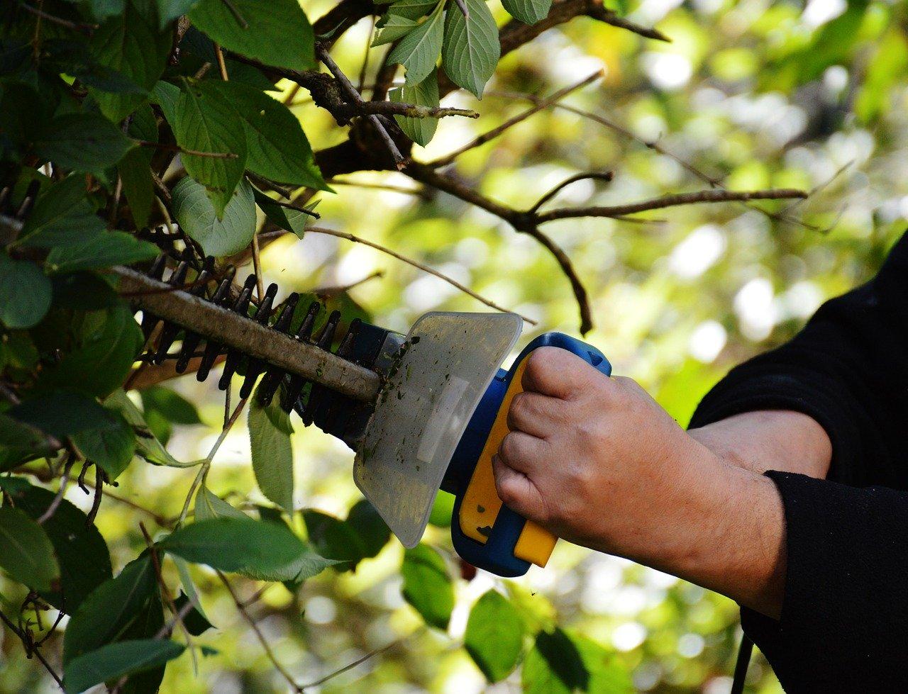 bush-972972_1280.jpg