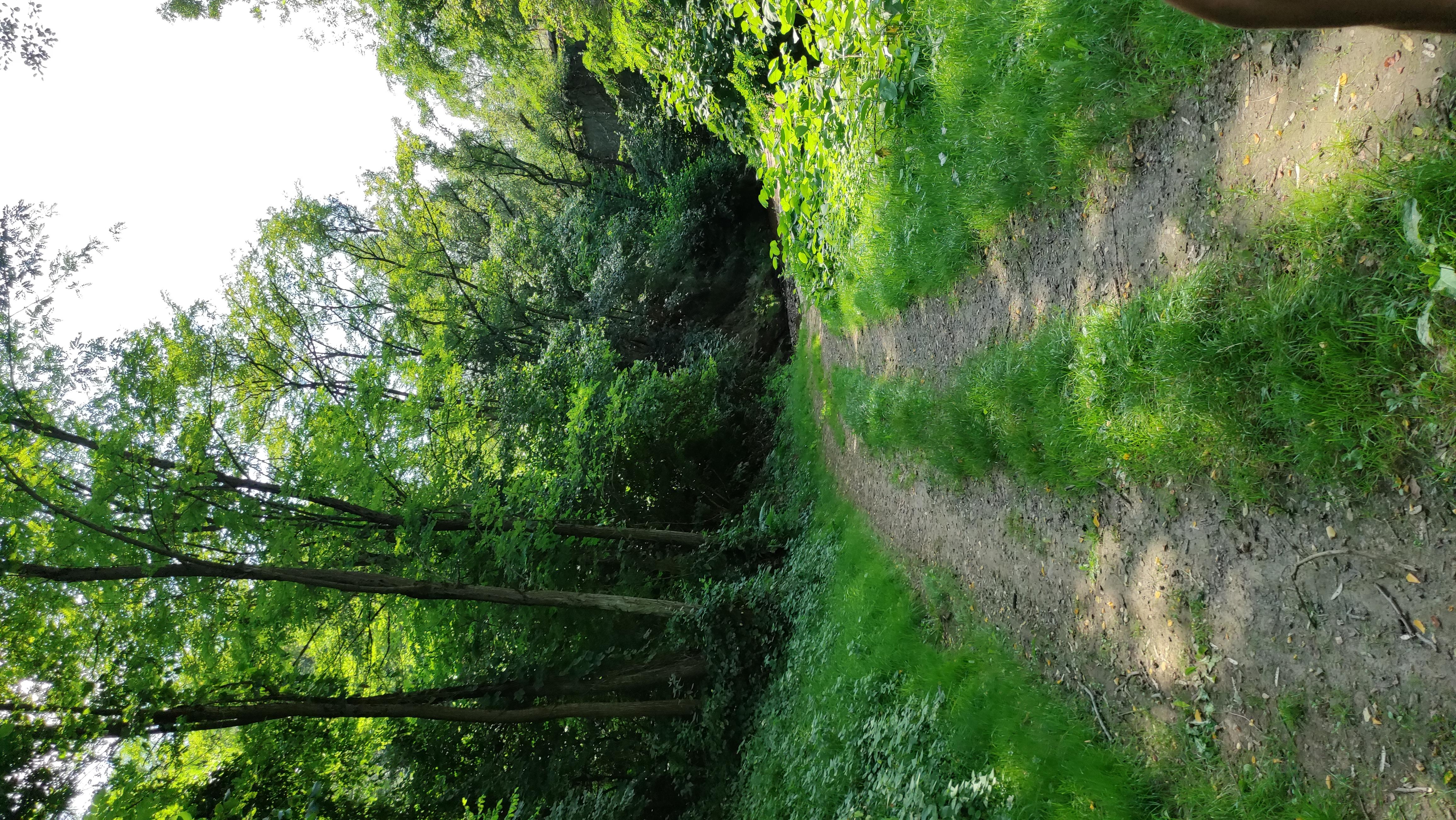 sentier botanique _4_.jpg