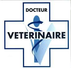 cabinet vétérinaire.jpg
