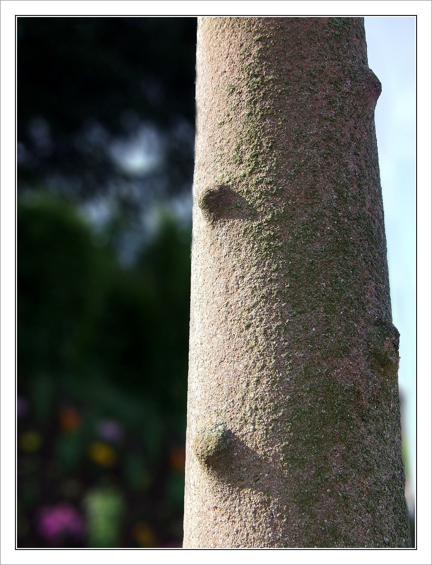 Croix des père  - Fût entièrement écoté-nano-BorderMaker.jpg