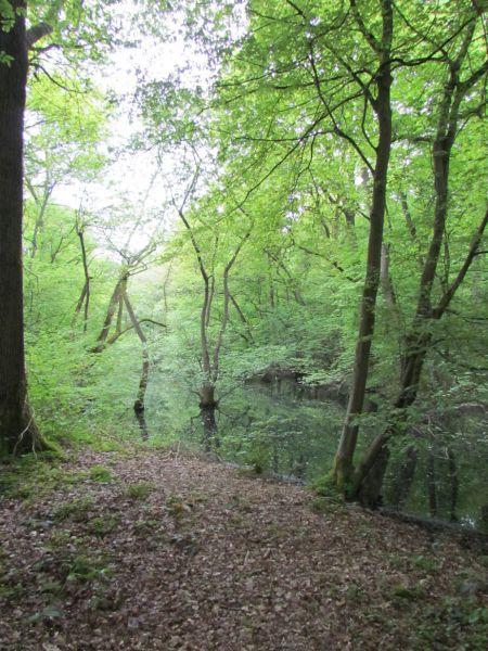 Forêt 2.jpg