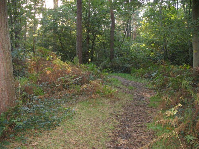 Forêt 1.jpg