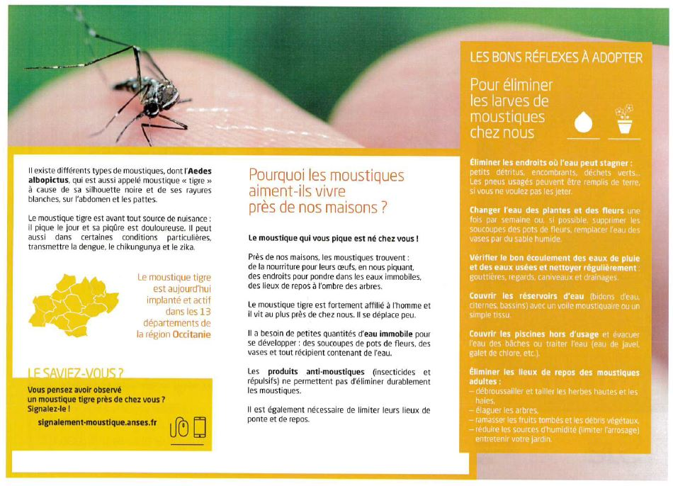 Moustique tigre - Flyer 2.JPG