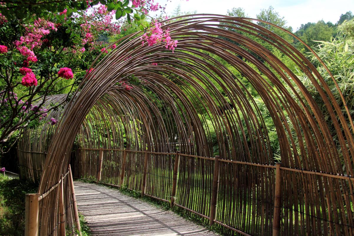 bambou 4.jpg