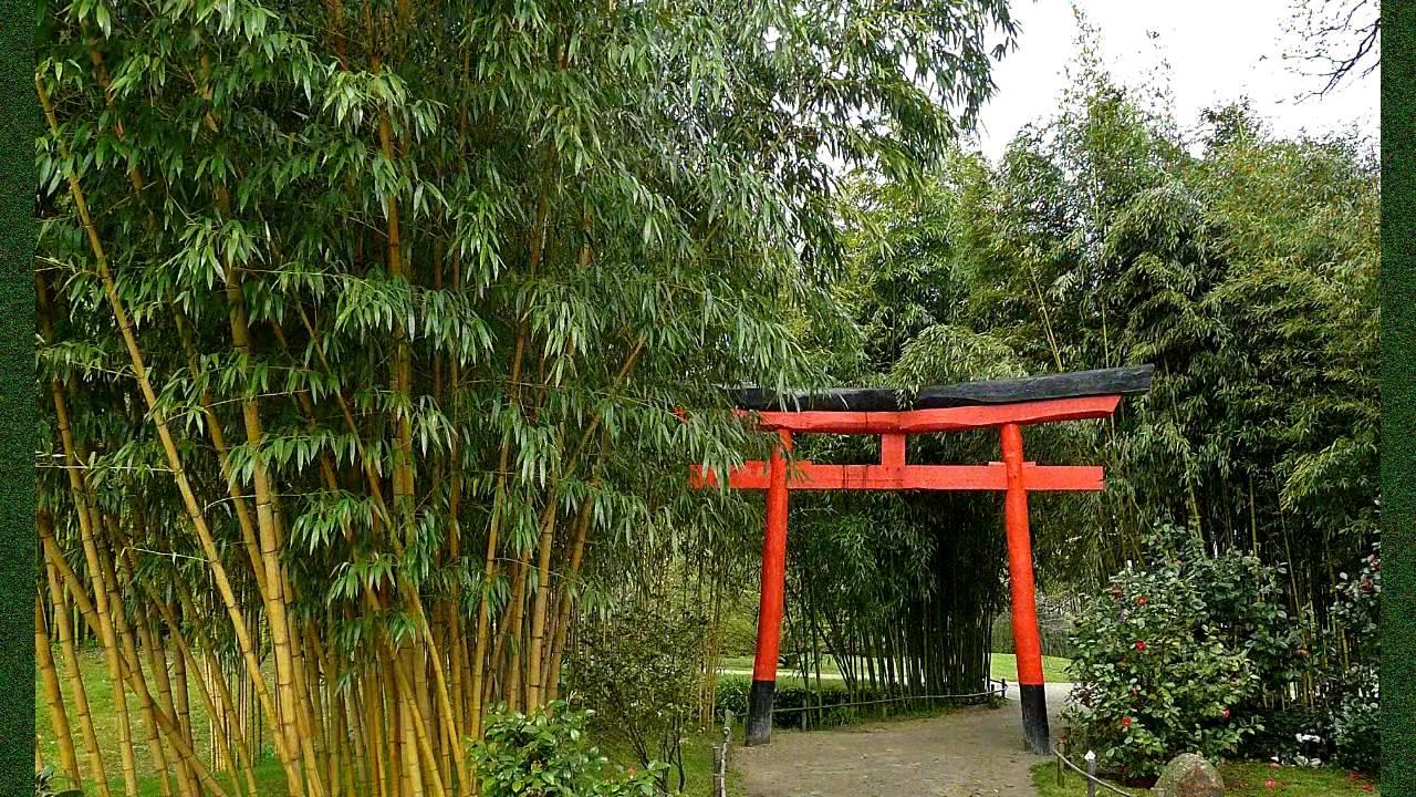 bambou 3.jpg