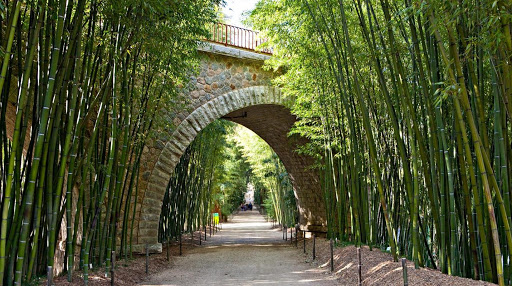 Bambou 1.jpg