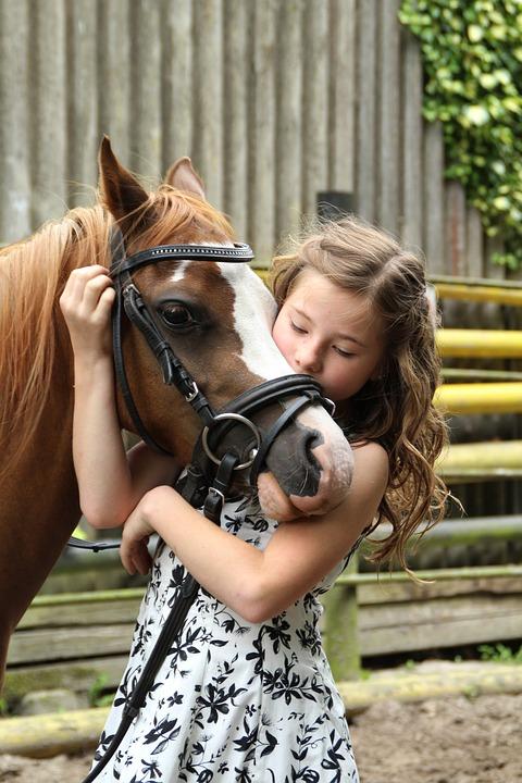 pony-2595144_960_720.jpg