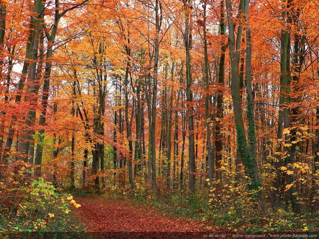 foret-arbres-automne.jpg