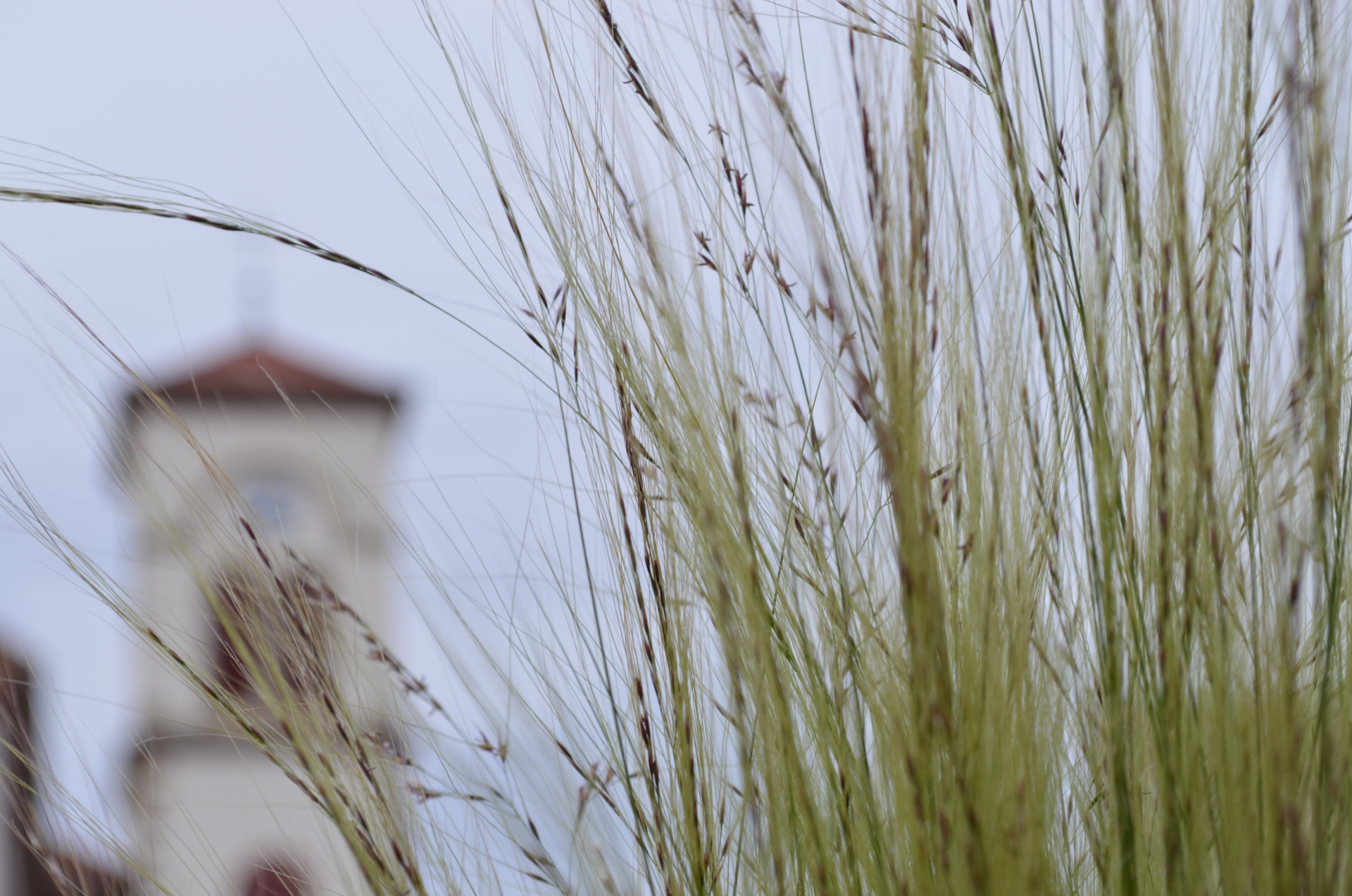 Photo flou herbes eglise.jpeg
