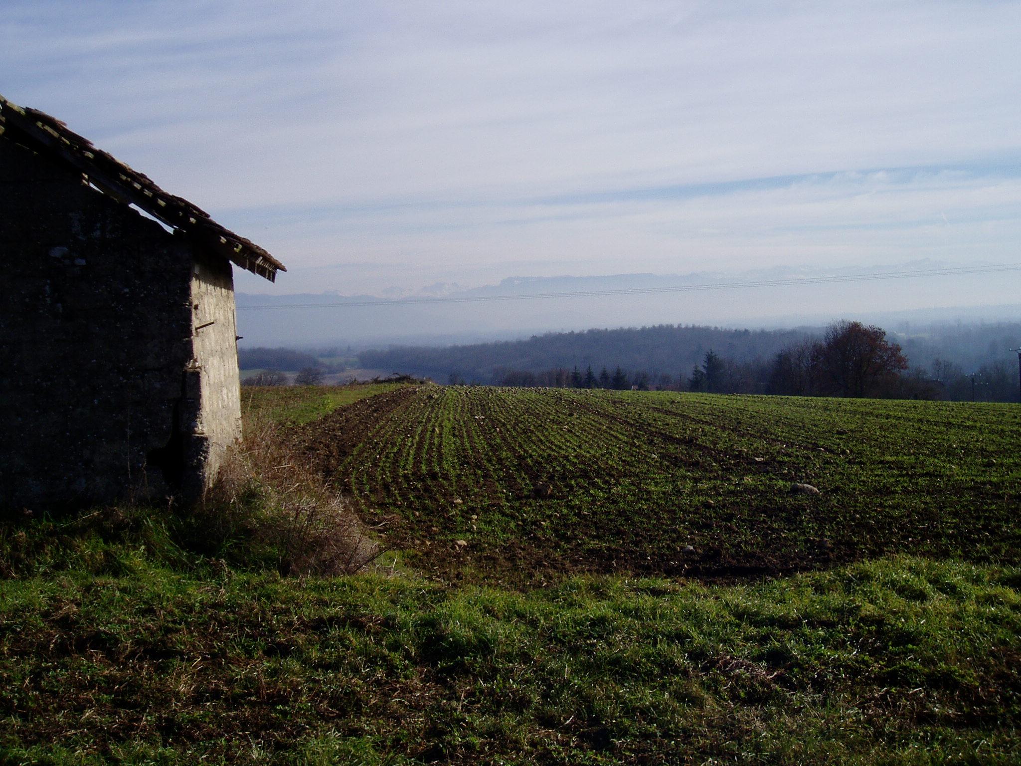 paysage champs®JFD.jpg