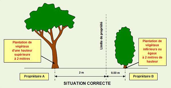 VOISINS distance-plantation-en limite de propriété.jpg