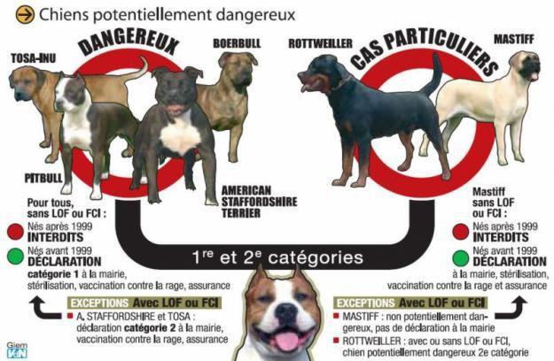CHIENS affiche-chien-dangereux.jpg