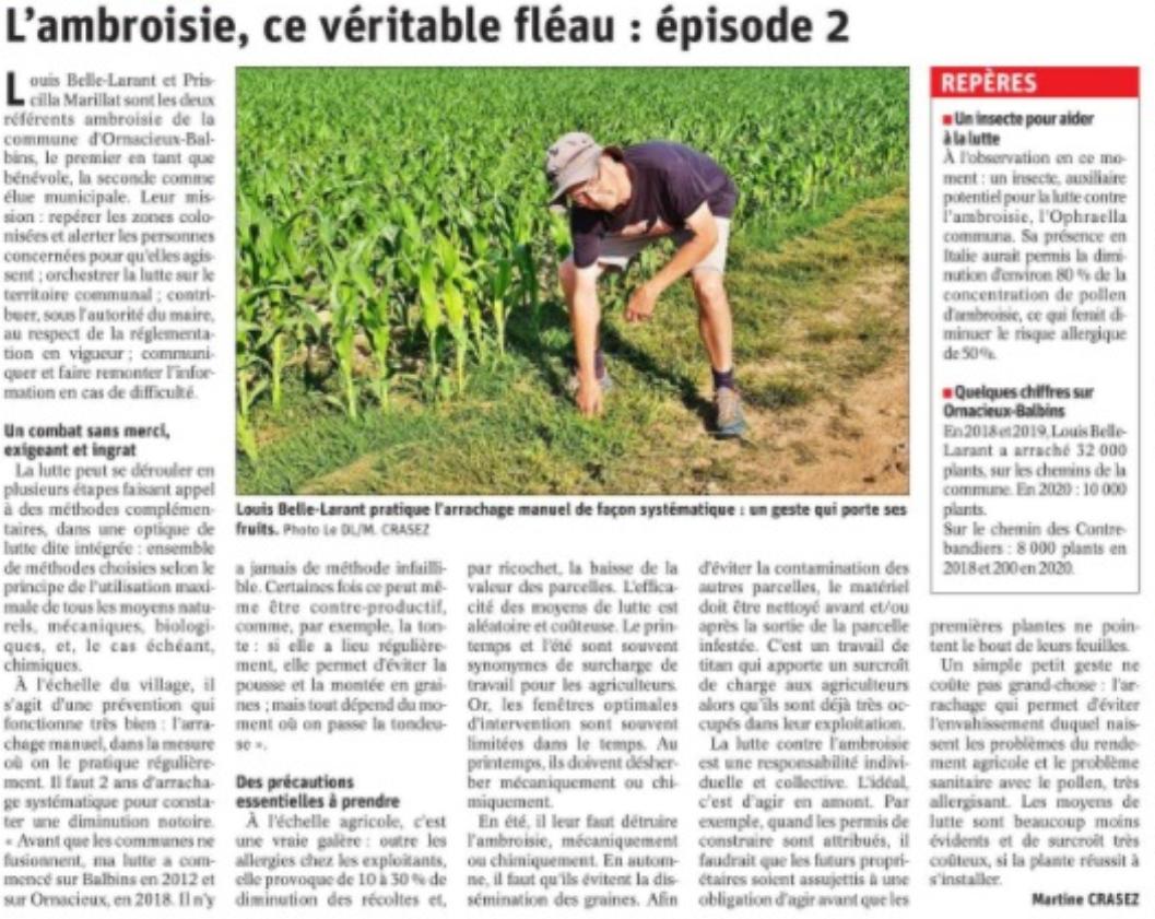 Ambroisie V4.PNG