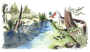 dessin-faune-et-flore.png