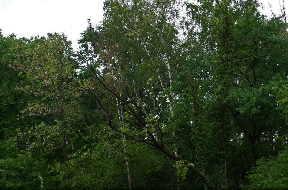 elagage arbres 3.jpg