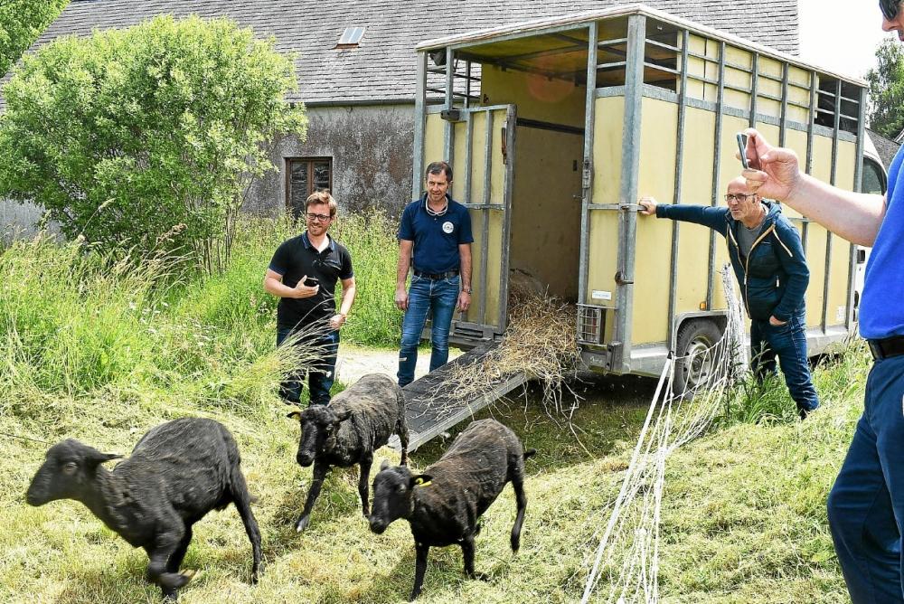les-cinq-moutons-sont-arrives-vendredi-apres-midi-en_4580809.jpg