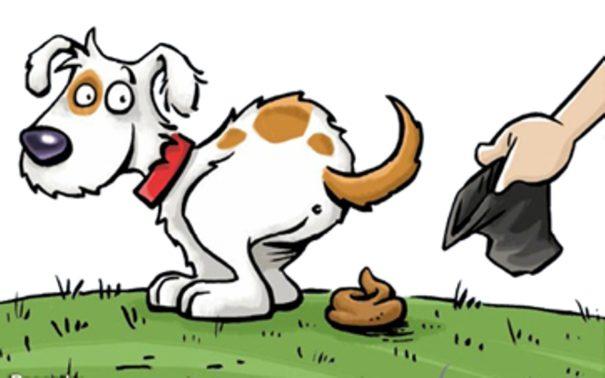 crotte chien.jpg