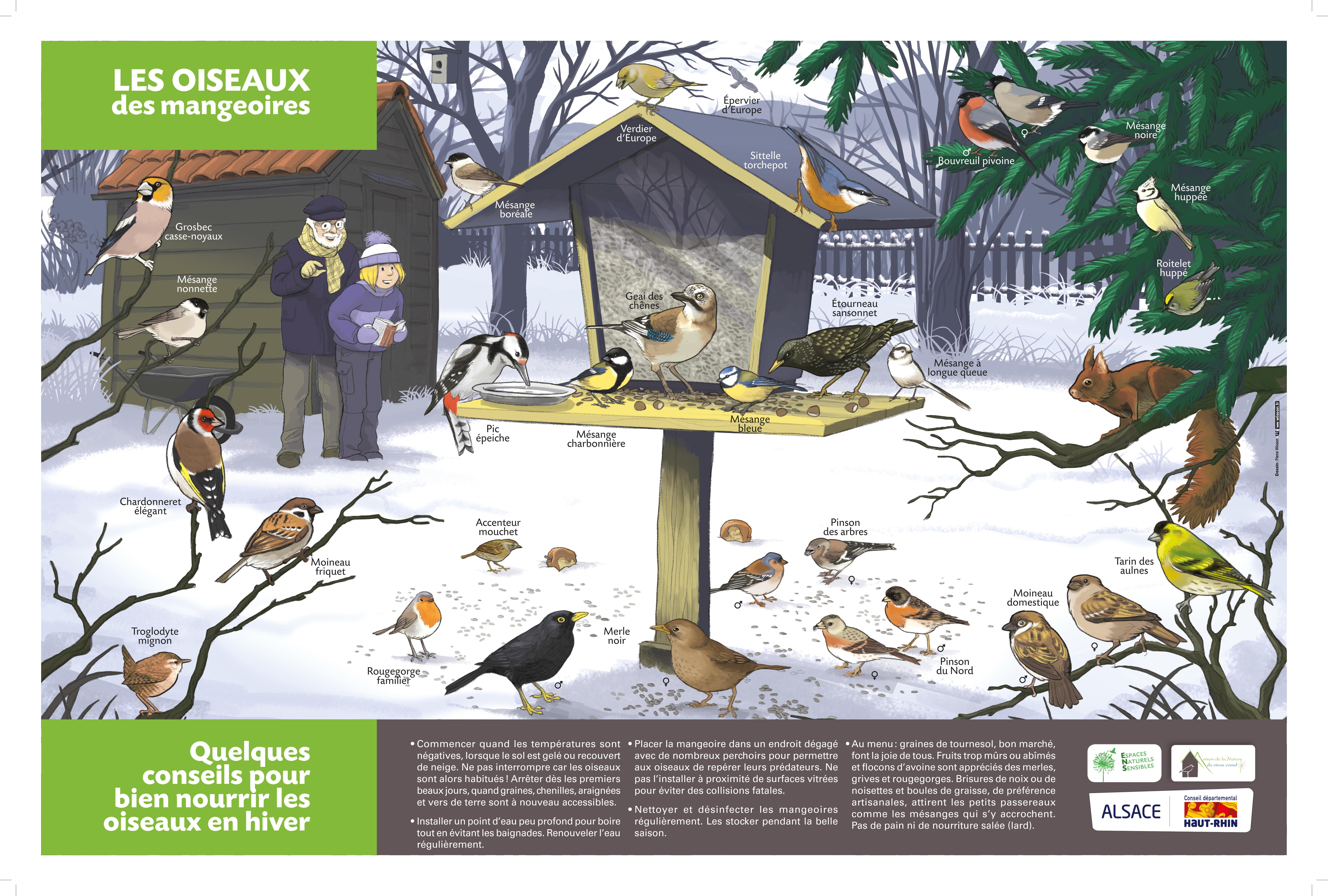 Affiche oiseaux mangeoire 18 60x40_1.jpg