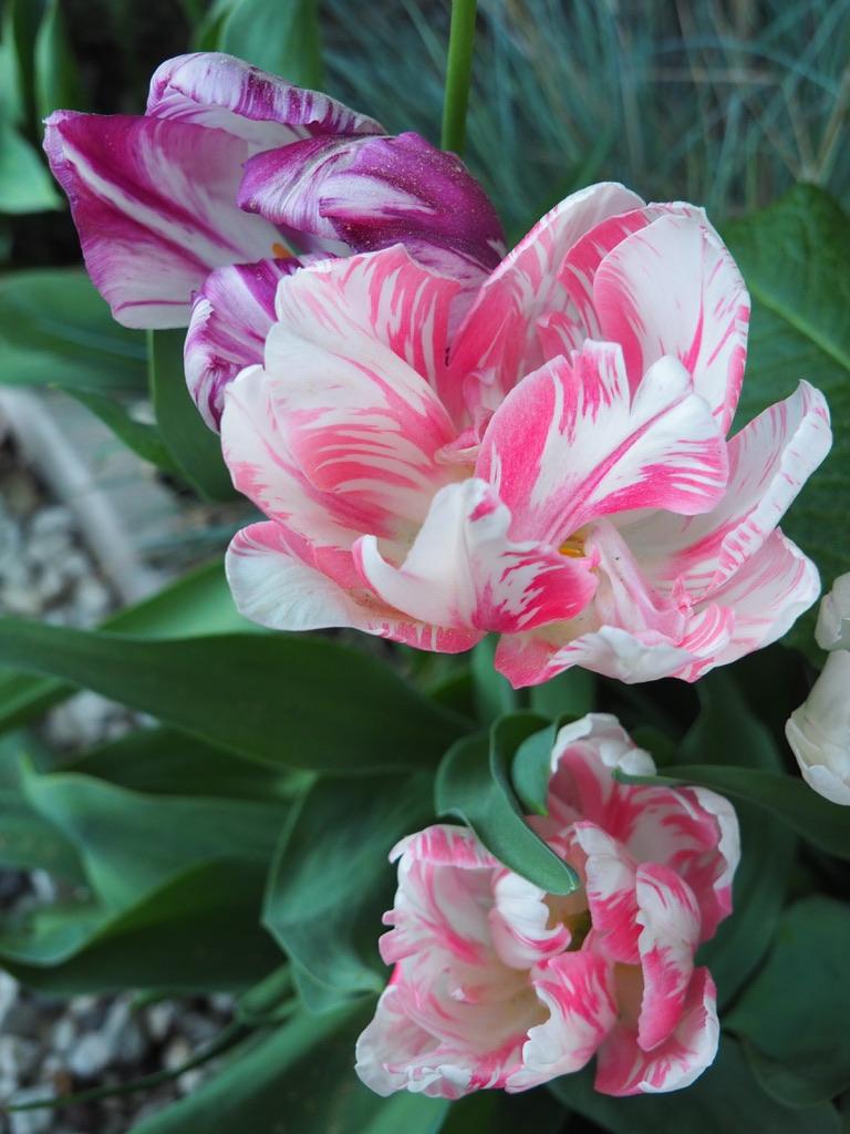 Maisons fleuries 6.jpg