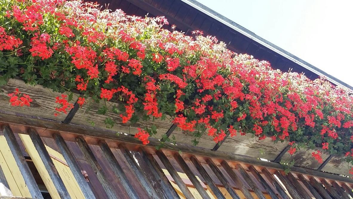Maisons fleuries.jpg