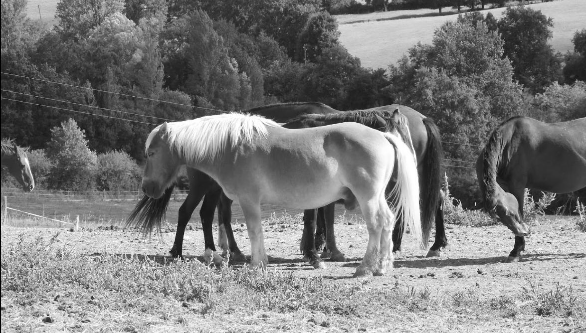 centre equestre.PNG