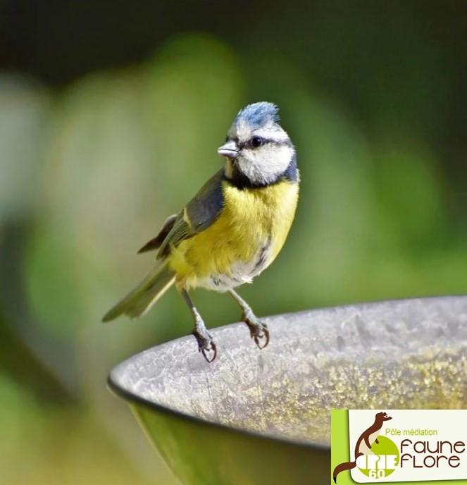 nourrissage oiseau.jpg