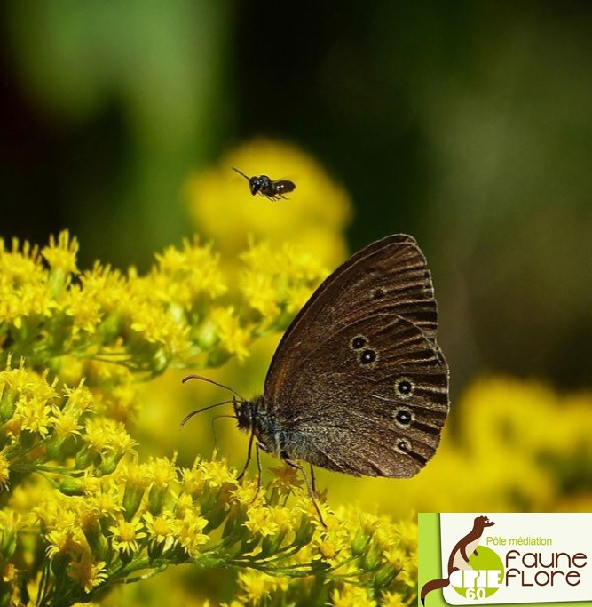 insectes hiver.jpg