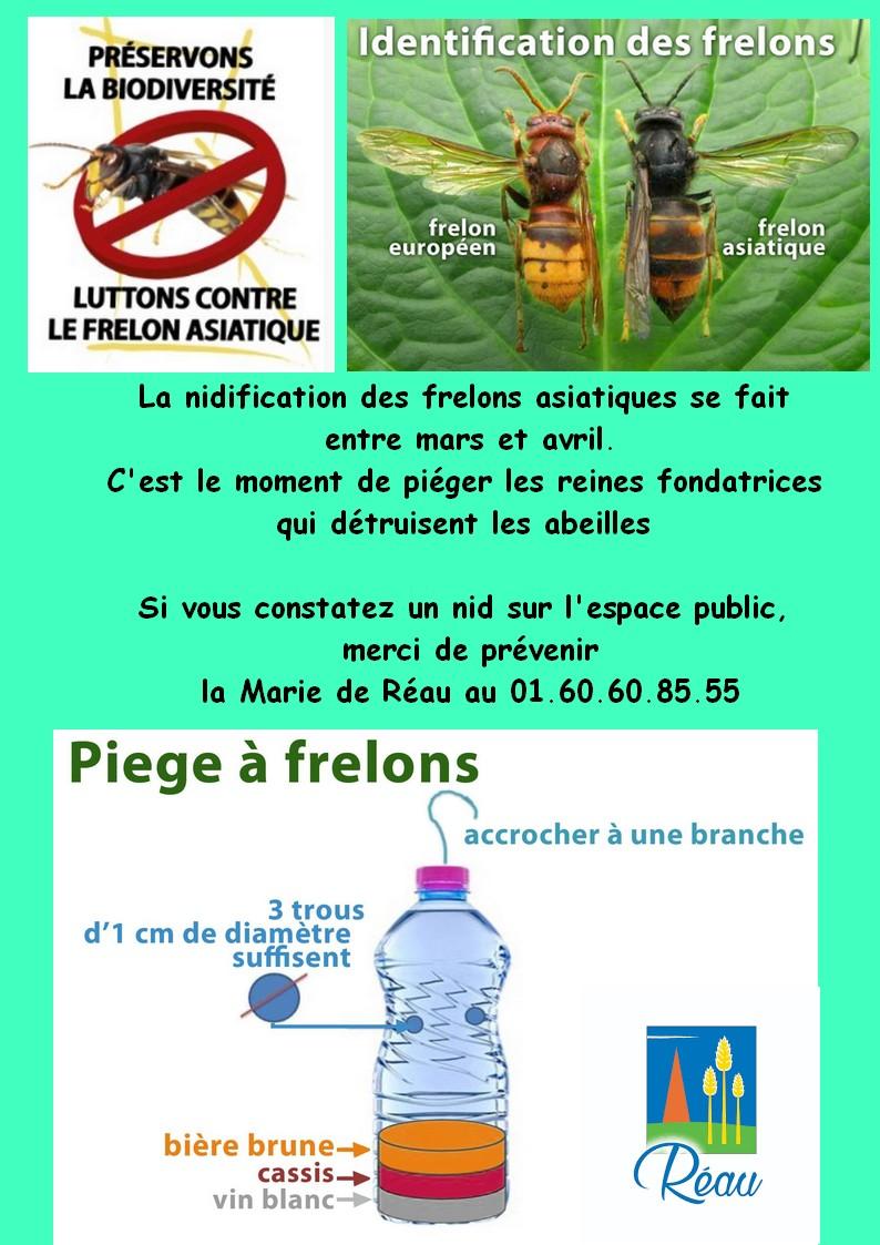 campagne de lutte contre les frelons asiatiques.jpg