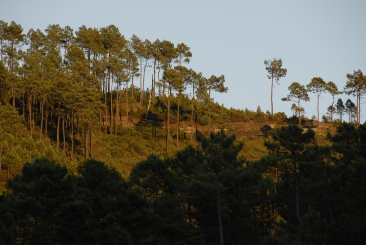 colline face aux drouilhèdes.jpg