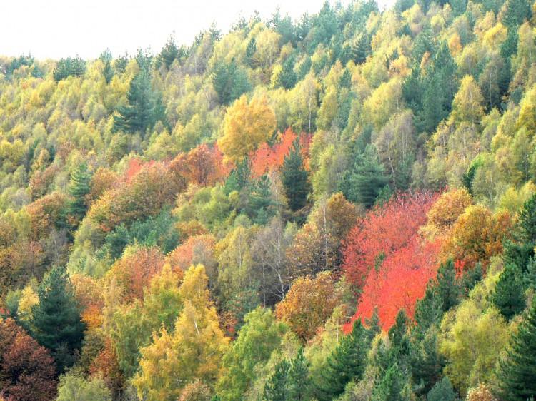 automne en cévennes.jpg