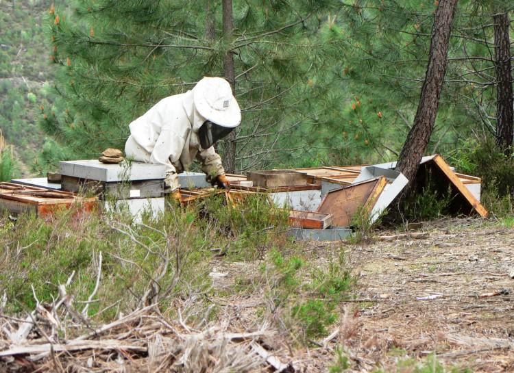 ruches aux drouilhèdes.jpg