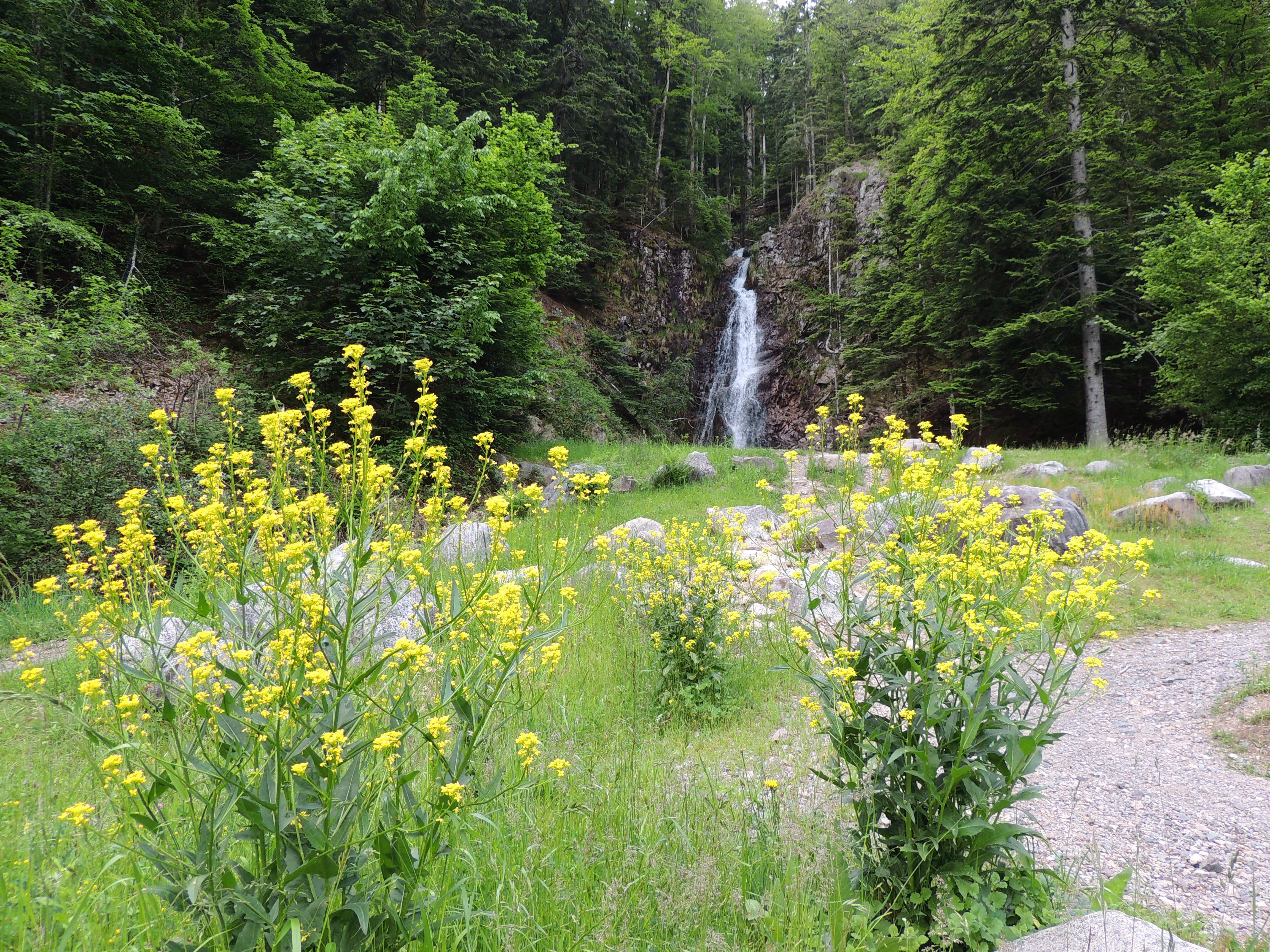 vue sur cascade avec fleurs.JPG