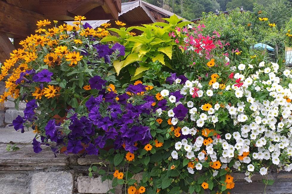 fleurissement_1020.jpg.jpg