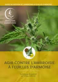 ambroisie lutte 3.jpg