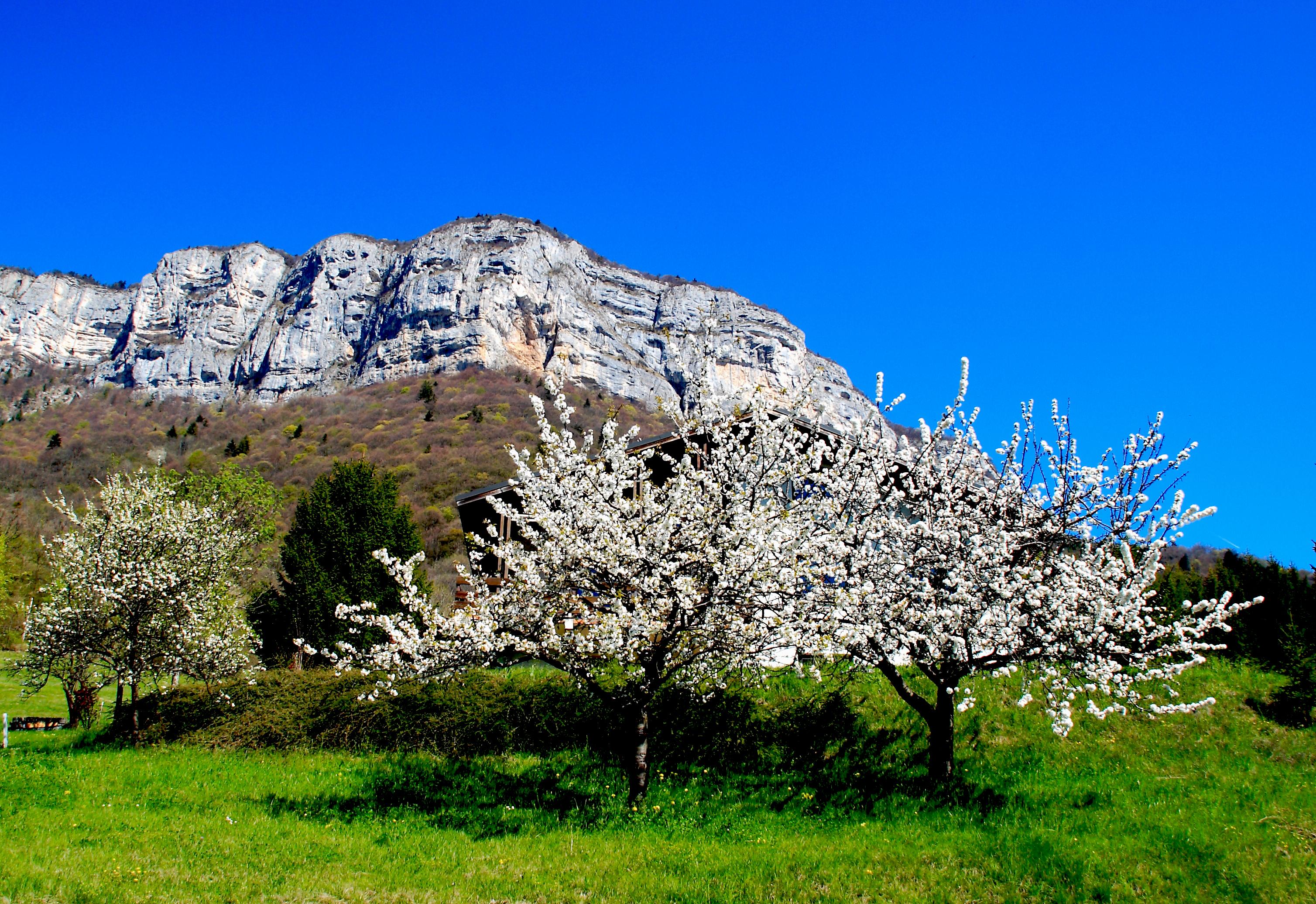 photo fanch printemps.jpg