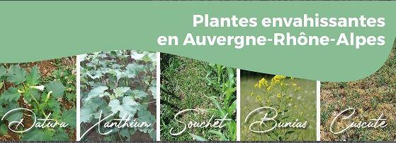 Plantes envahissantes.JPG
