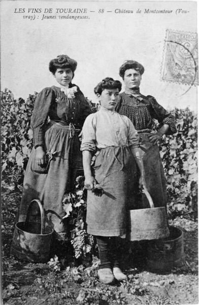 6 -Histoire de la vigne _8_.jpg
