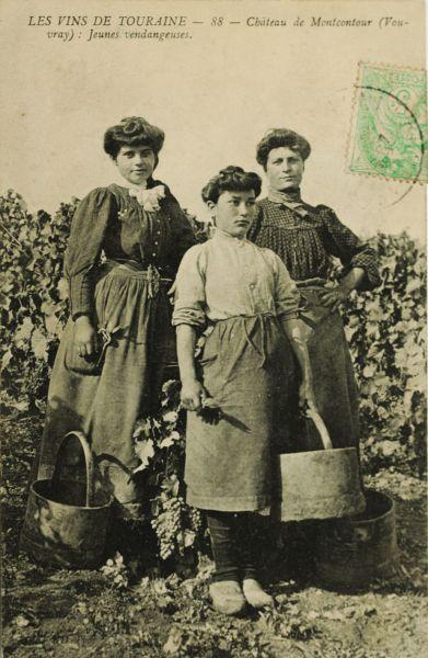 6 -Histoire de la vigne _10_.jpg