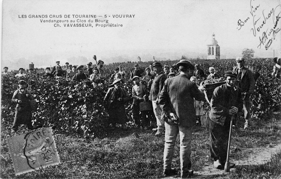 6 -Histoire de la vigne _5_.jpg