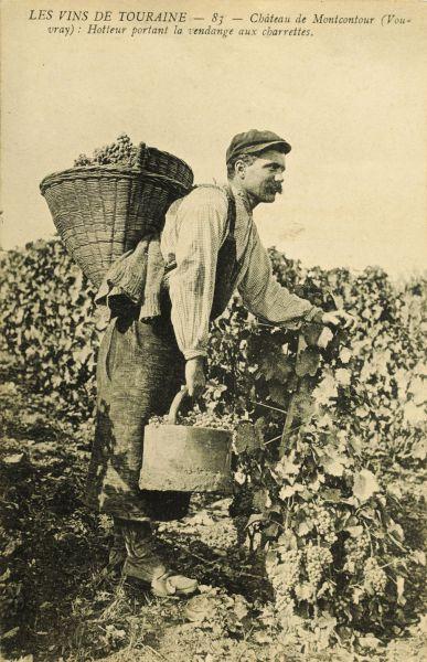 6 -Histoire de la vigne _7_.jpg