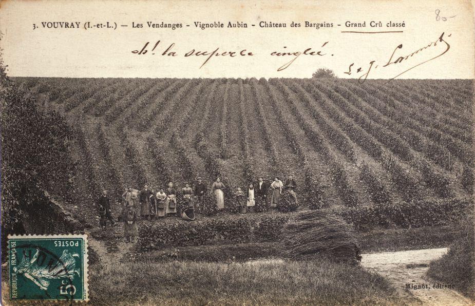 05 - La vigne _5_.jpg