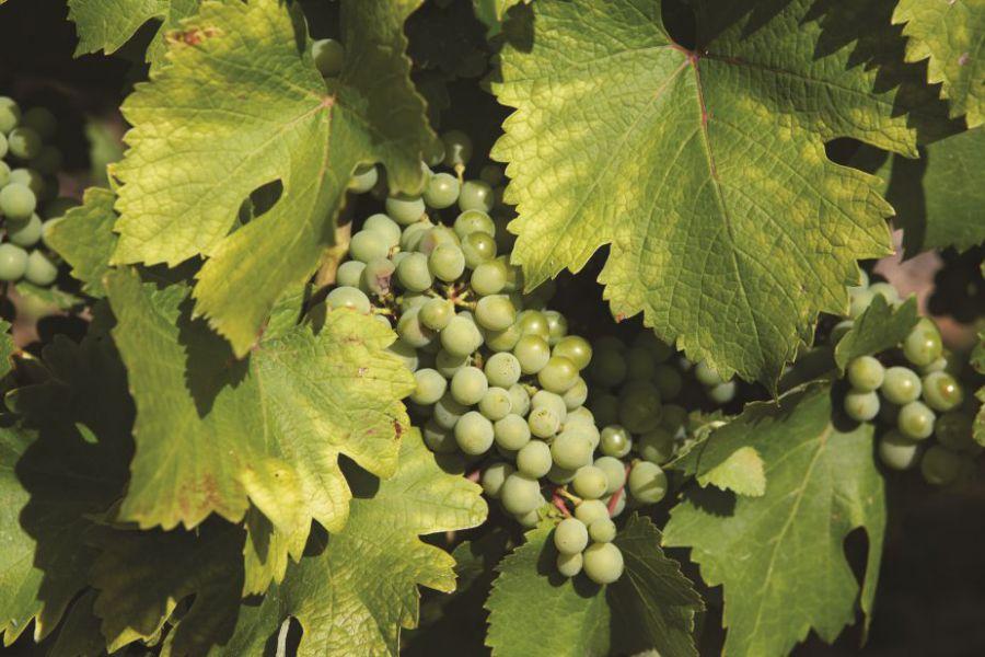 4 - Histoire de la vigne.jpg