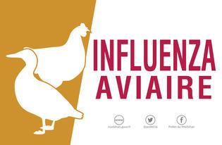 CP-Influenza-aviaire_large.jpg