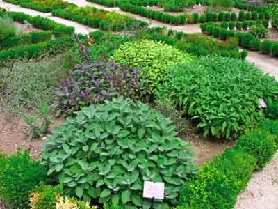 LGA - Jardin plante.jpg