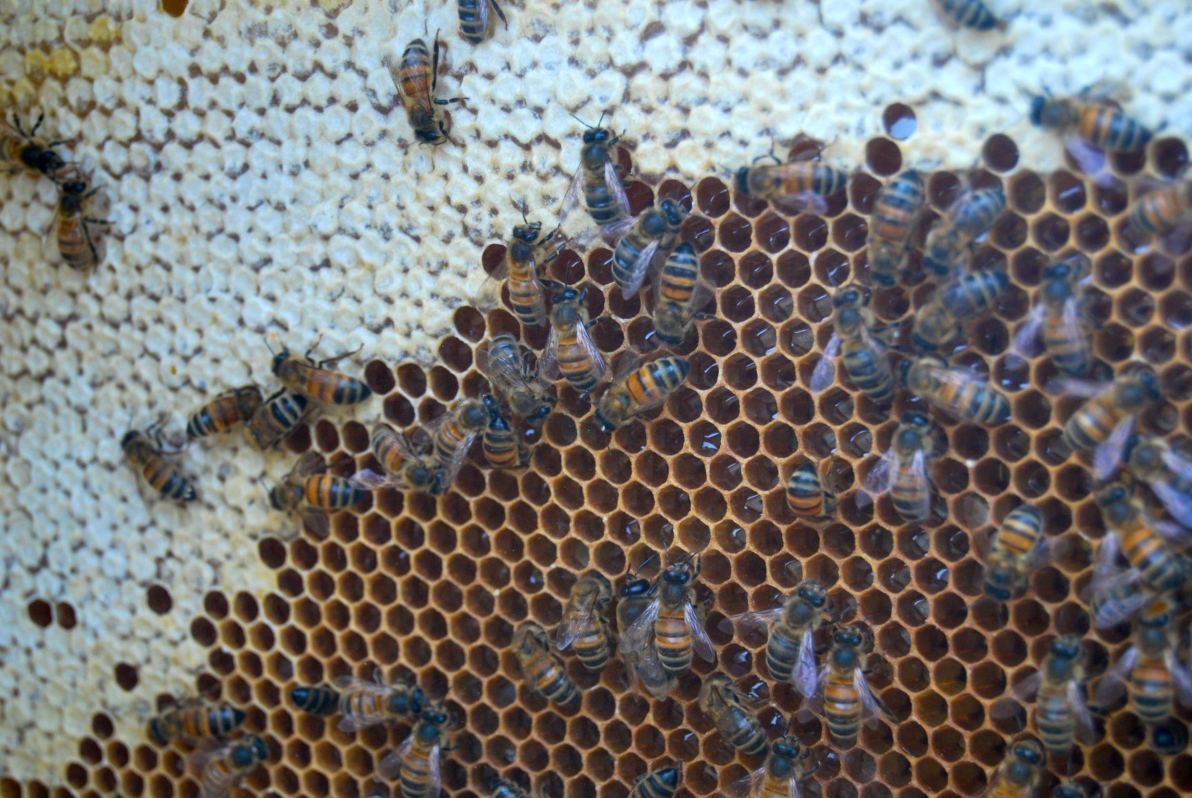 abeilles.JPG