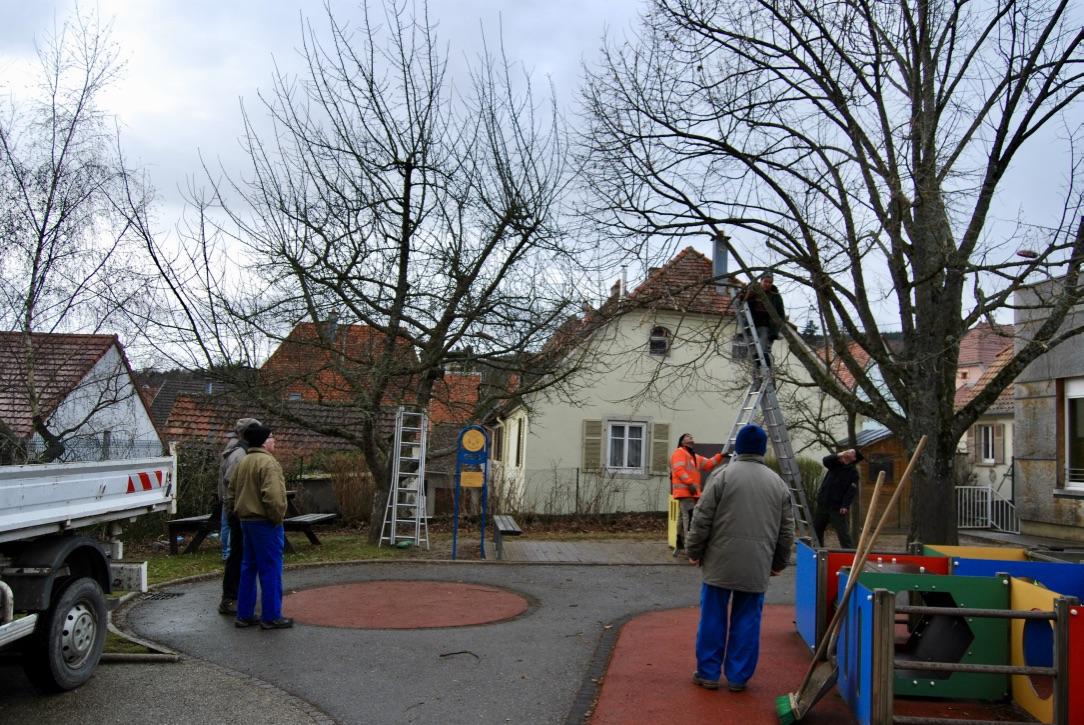 21.02 - Taille Arbres Ecole Maternelle _43_.jpg