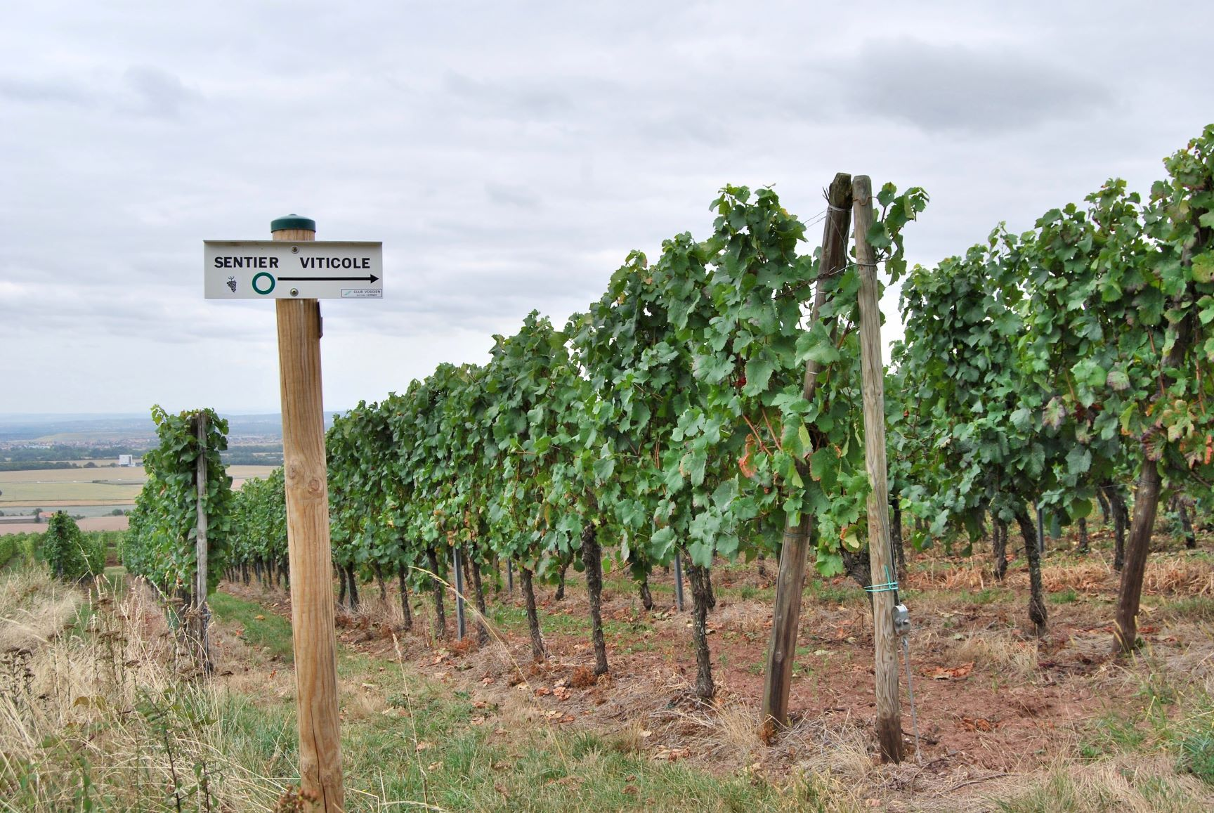 Sentier viticole.1.jpg