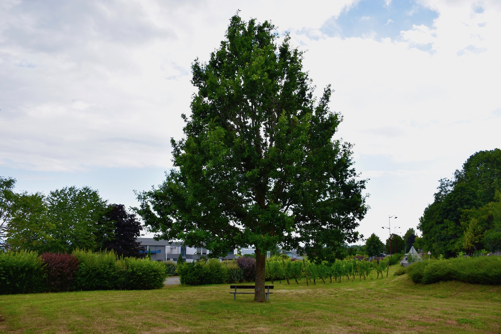 arbre du jumelage.jpg