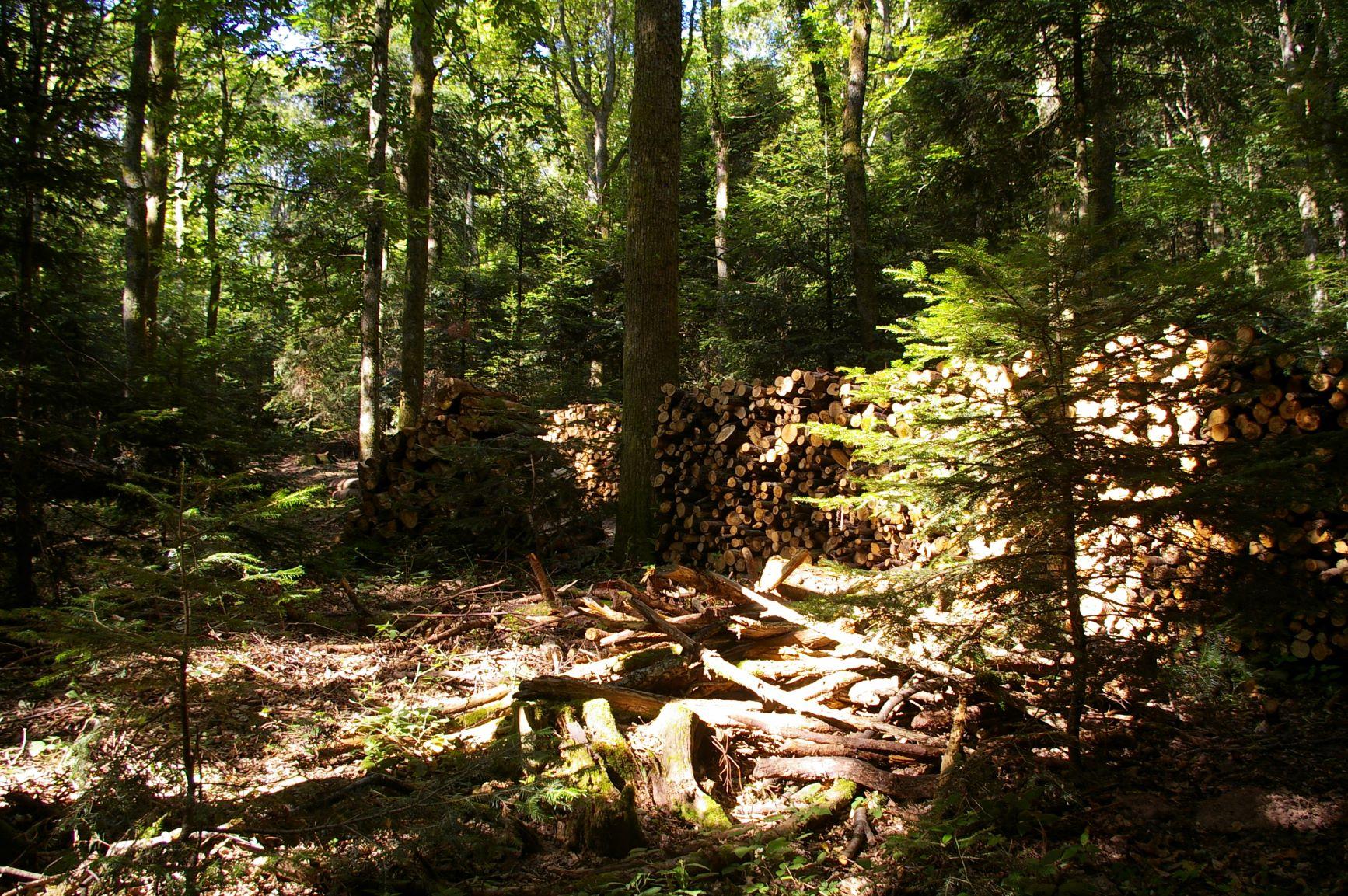Coupes en forêt.JPG