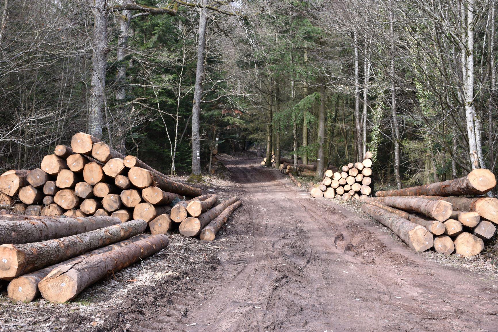 Coupes de bois sur chemin.jpg